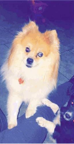 Lost Male Dog last seen Near N 35th Ave & W Butler Dr, Phoenix, AZ 85051