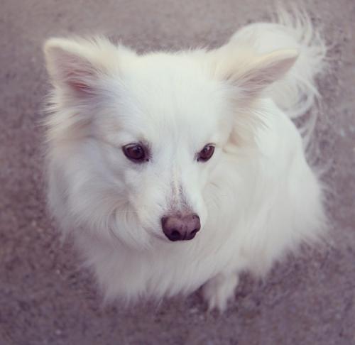 Lost Male Dog last seen Near Dylan Dr & Jagger Ct, Virginia Beach, VA 23464