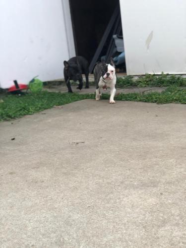 Lost Female Dog last seen Fort eustis , Newport News, VA 23604