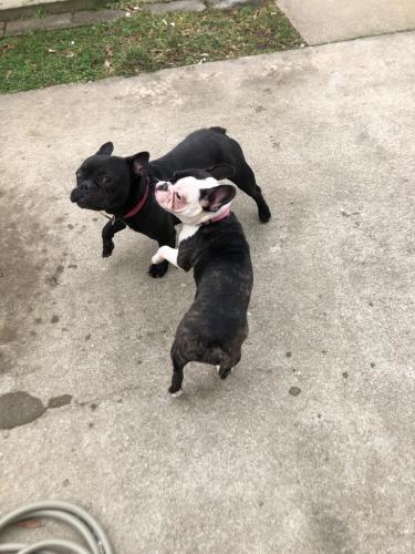 Lost Male Dog last seen Fort eustis , Newport News, VA 23604