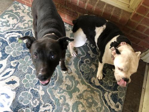 Lost & Found Dogs, Cats, and Pets in Florence, SC 29501