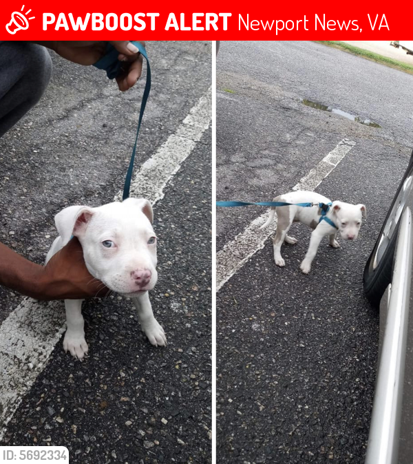 Lost Female Dog last seen Dresden dr and Jefferson ave , Newport News, VA 23601