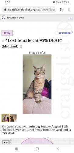 Craigslist Seattle Washington Pets | Modera Ballard