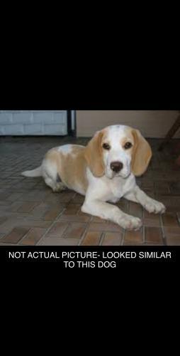 Found/Stray Unknown Dog last seen lynnhaven mall, Virginia Beach, VA 23456