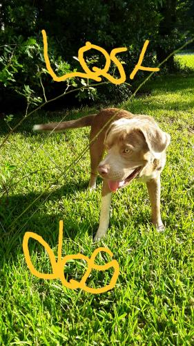 Lost & Found Dogs, Cats, and Pets in Mississippi 39465