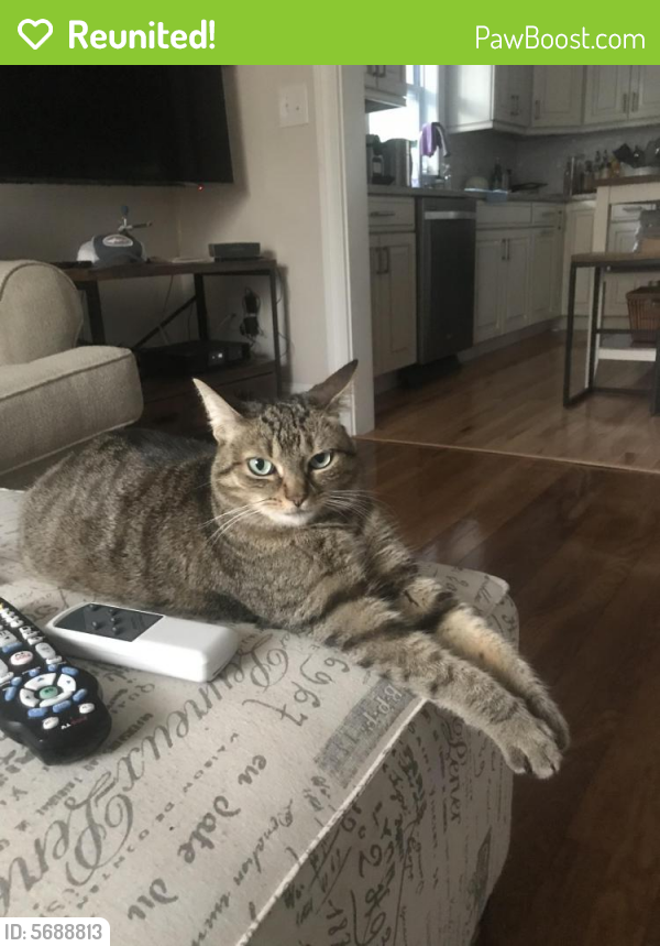 Reunited Female Cat last seen Highlands avenue Needham, Needham, MA 02492
