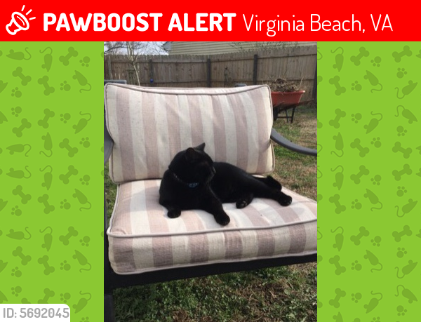 Lost Female Cat last seen Damn Neck Rd & Rosemont Rd, Virginia Beach, VA 23453