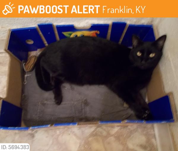 Found/Stray Male Cat last seen Flying J Truck Stop,  Premier Trucking  Franklin, KY, Franklin, KY 42134