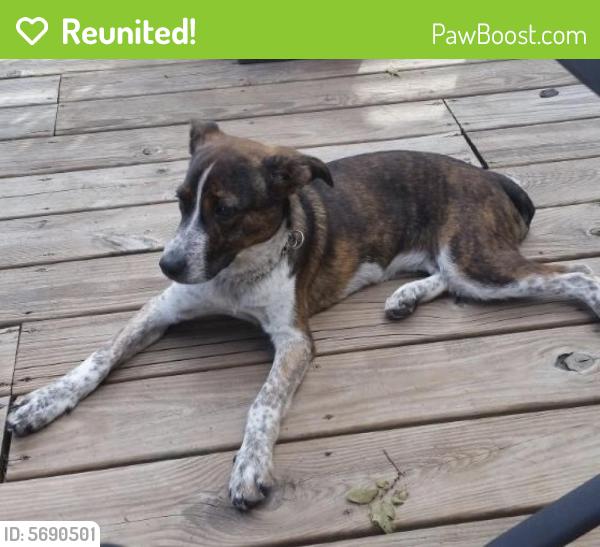 Reunited Female Dog last seen 3rd street , Lee's Summit, MO 64081