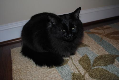 Lost Male Cat last seen  Culpepper Landing, Chesapeake , Chesapeake, VA 23323