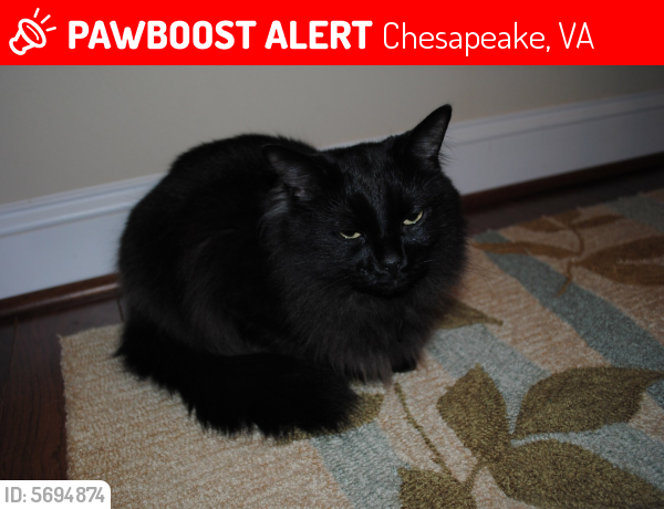 Lost Male Cat last seen  Culpepper Landing, Chesapeake , Chesapeake, VA 23323