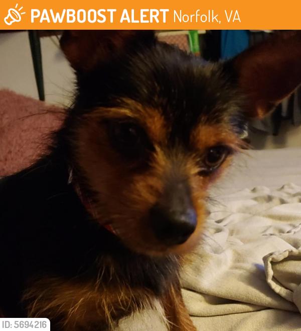 Found/Stray Male Dog last seen Near Kempsville Blvd & Virginia Beach Blvd , Norfolk, VA 23502