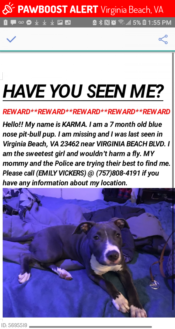 Lost Female Dog last seen Virginia beach blvd, Virginia Beach, VA 23462