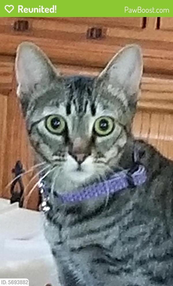 Reunited Female Cat last seen Plantation Drive, Virginia Beach, VA 23454