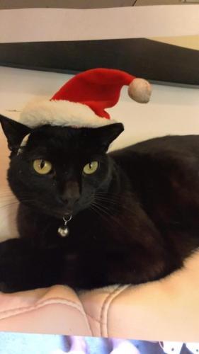 Lost Male Cat last seen Bruce Rd. & Tyre Neck Rd. 23321, Chesapeake, VA 23321