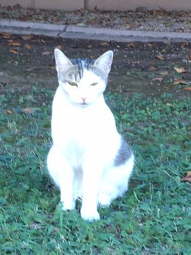 Found/Stray Unknown Cat last seen 54th Street & Bell Road, Phoenix, AZ 85254