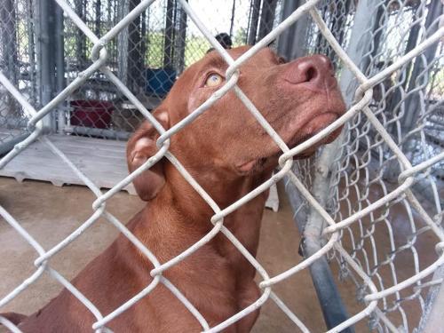 Found/Stray Female Dog last seen Winnie Community Hospital, Winnie, TX 77665