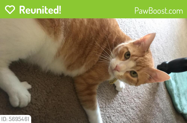Reunited Male Cat last seen Newport News by Warwick and menchville, Newport News, VA 23602