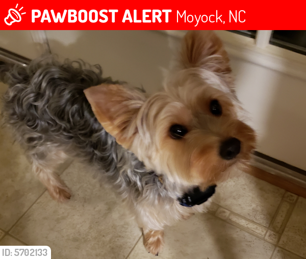 Lost Male Dog last seen Backyard in Crown Point, Moyock, NC 27958