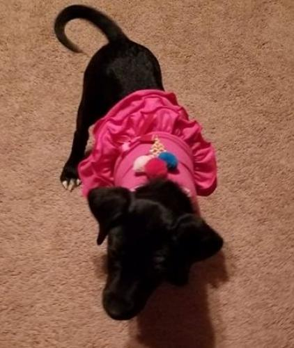 Lost Female Dog last seen waterford/cheshire forest, Chesapeake, VA 23322