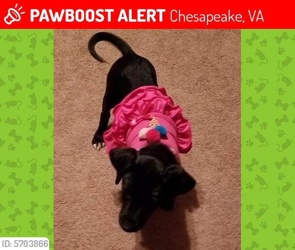 Found/Stray Female Dog last seen waterford/cheshire forest, Chesapeake, VA 23322