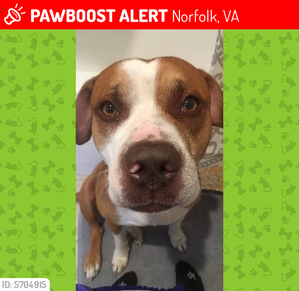 Lost Male Dog last seen Near keller ave, Norfolk VA 23509, Norfolk, VA 23509