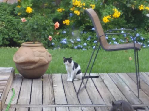 Found/Stray Unknown Cat last seen Winkbow & Metrodale, Houston, TX 77040