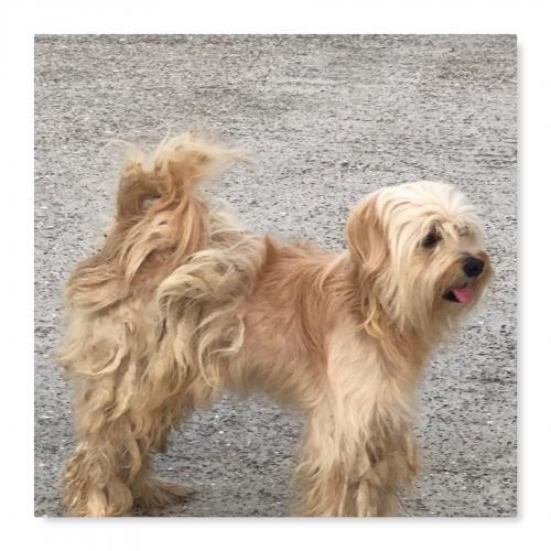 Found/Stray Male Dog last seen N. Cypress Houston and Marwood Estates , Marwood Estates, TX 77070