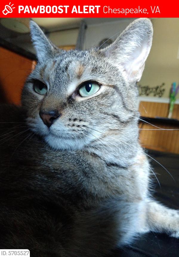 Deceased Female Cat last seen Sturbridge, shoveller ct, Chesapeake, VA 23320