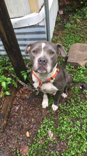 Lost Male Dog last seen Odom elementary , Houston, TX 77060