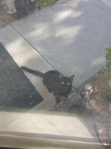Found/Stray Unknown Cat last seen E Mesquite Street, Gilbert AZ 85296 Near Silverstone Ranch horse stables, Gilbert, AZ 85295