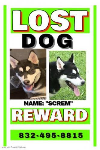 Lost Male Dog last seen Near vickie springs ln 77086, Houston, TX 77086
