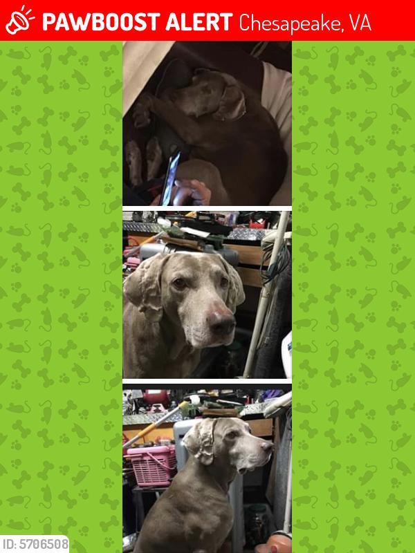 Lost Male Dog last seen Grassfield Walmart Che's, va , Chesapeake, VA 23322