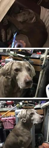 Lost Male Dog last seen Grassfield Walmart Che's, va , Chesapeake, VA 23322