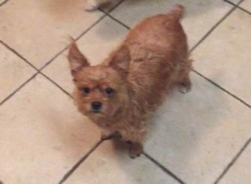 Lost Female Dog last seen Kroeger Street, Anahiem, CA , Anaheim, CA 92805