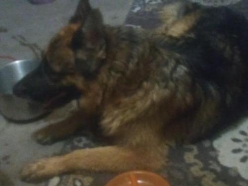 Found/Stray Male Dog last seen Chandler Boulevard and Arizona Avenue, Chandler, AZ 85225