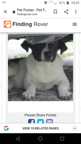 Lost & Found Dogs, Cats, and Pets in Sumter County, FL 34484
