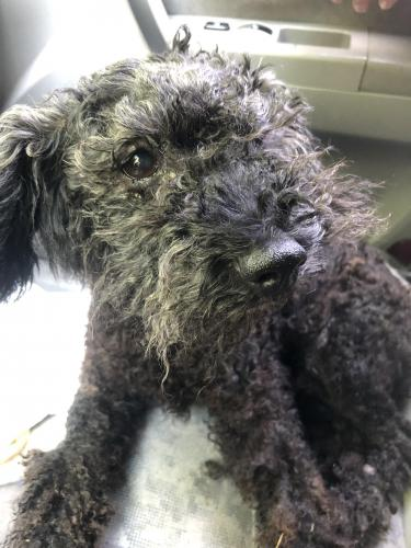 Lost & Found Dogs, Cats, and Pets in Catawba County, NC ...