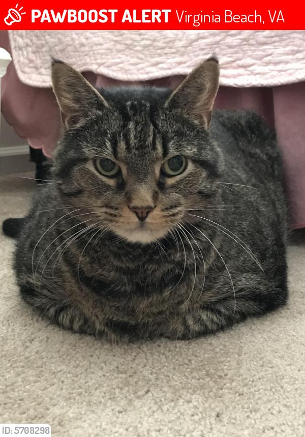 Lost Male Cat last seen Kellam Rd and Mandan Rd Pochahantas Village, Virginia Beach, VA 23462