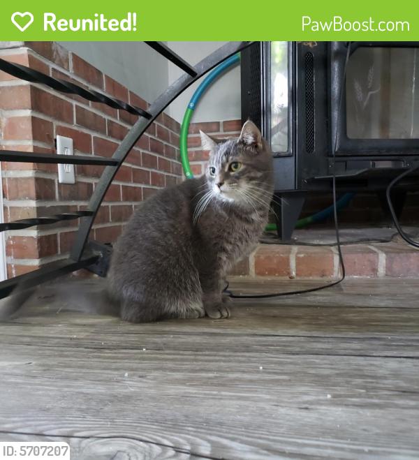 Reunited Female Cat last seen Near Blades Street, Norfolk, VA 23503
