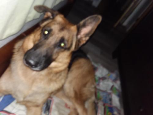 Lost Female Dog last seen Near exit 1131, Vidor, TX 77662