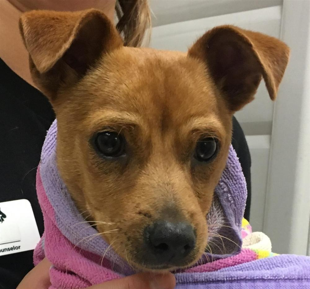 Lost & Found Dogs, Cats, and Pets in San Diego, CA 92064