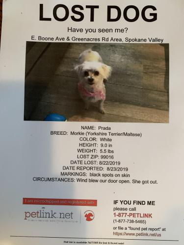 Lost Found Dogs Cats And Pets In Spokane Wa 99208