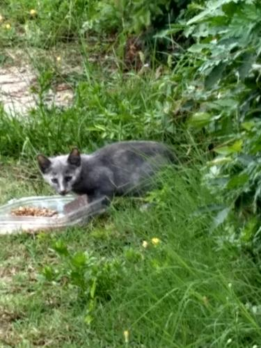 Found/Stray Unknown Cat last seen Near block west ocean view ave, Norfolk, VA 23503
