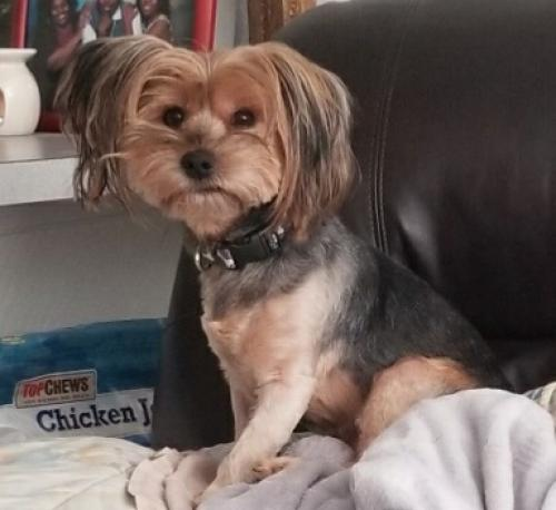 Lost Female Dog last seen Yellow and blue-green appartment complex, Norfolk, VA 23503