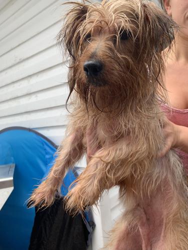 Found/Stray Male Dog last seen Manchester Village, Virginia Beach, VA 23453