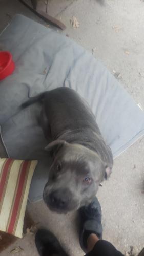 Found/Stray Male Dog last seen Level green , Virginia Beach, VA 23464