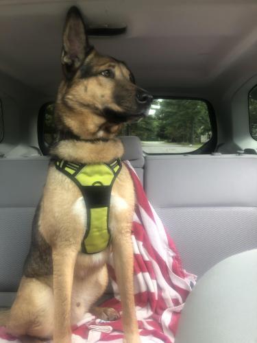 Found/Stray Male Dog last seen Red Mill neighborhood park, Virginia Beach, VA 23456