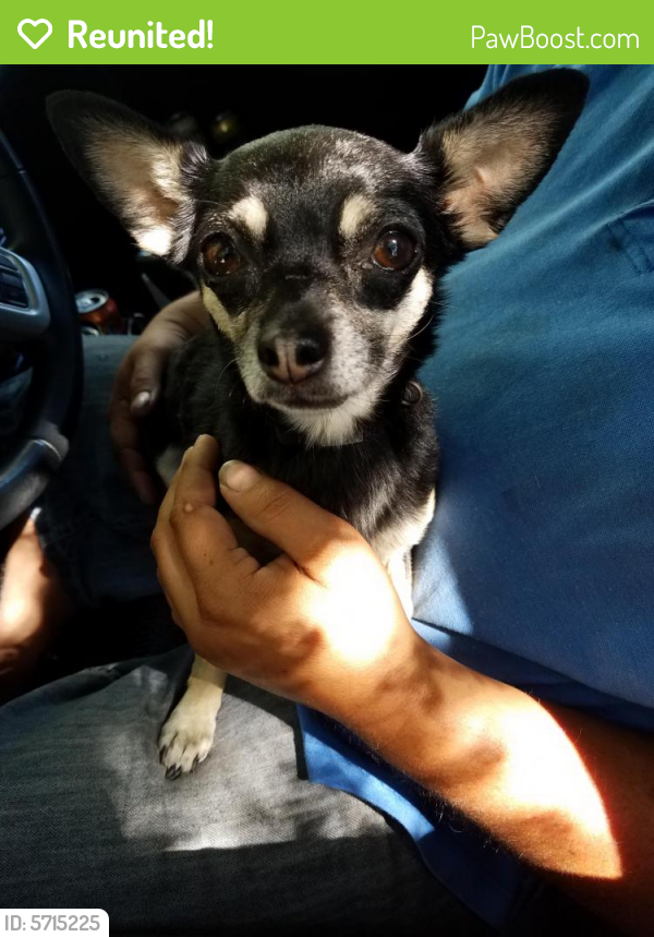 Reunited Female Dog last seen Fairview and Eagle , Meridian, ID 83642