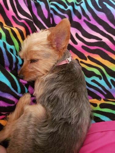Lost & Found Dogs, Cats, and Pets in Longview, TX 75662